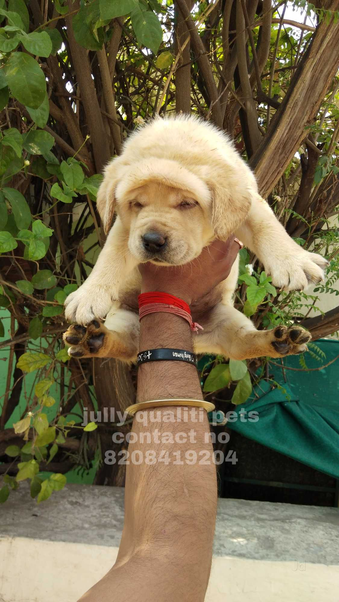 Top 20 Pet Shops For Dog in Amravati - Best Pet Store - Justdial