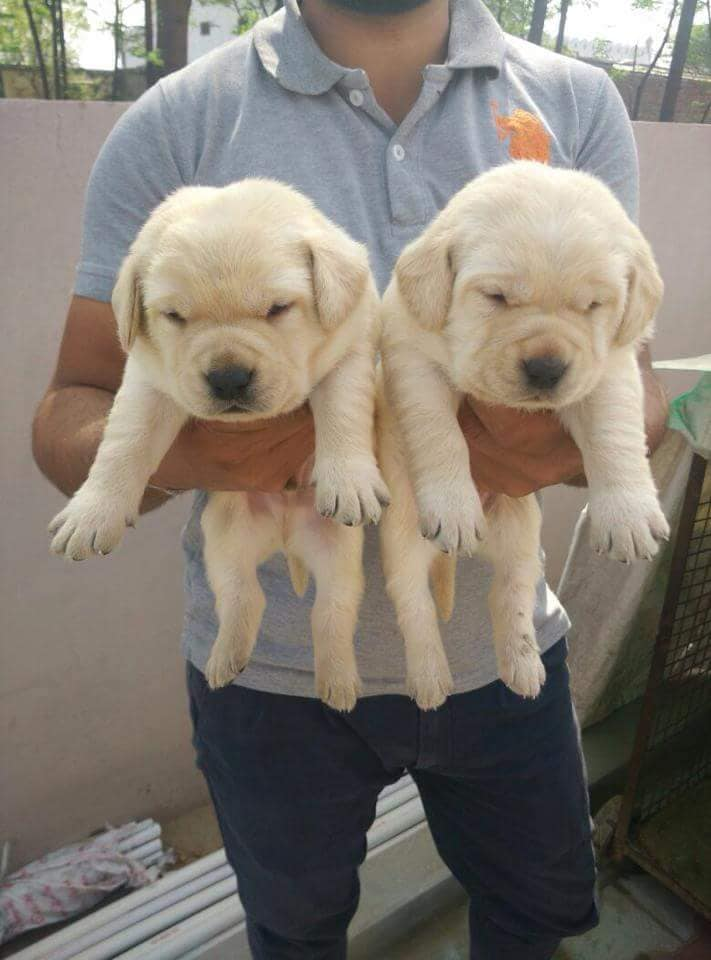 Top 100 Pet Shops For Dog In Bangalore Best Pet Store Justdial