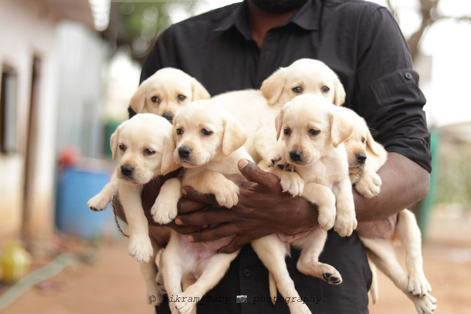 Top 50 Dog Kennel Shops in Coimbatore - Best Dog Kennels Suppliers