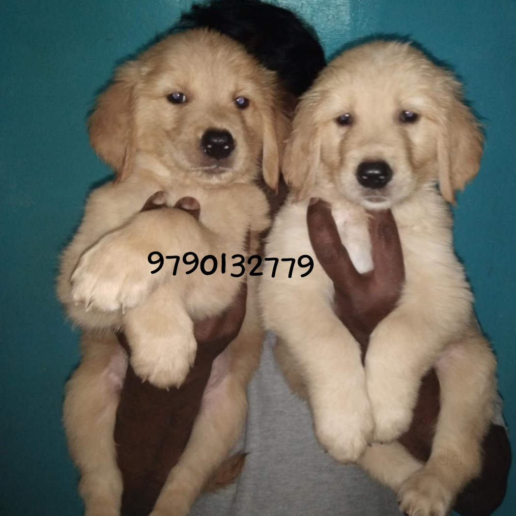 Top 50 Dog Kennel Shops in Coimbatore - Best Dog Kennels