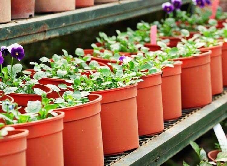 Top Plant Nurseries In Krishnanagar Best Nursery
