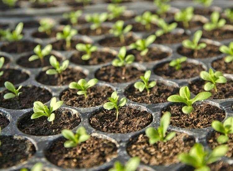 Unique Garden Tools Photos, Malerkotla, Sangrur   Plant Nurseries