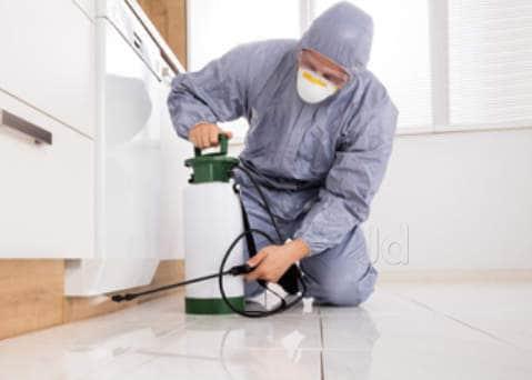Image result for surekill pest control