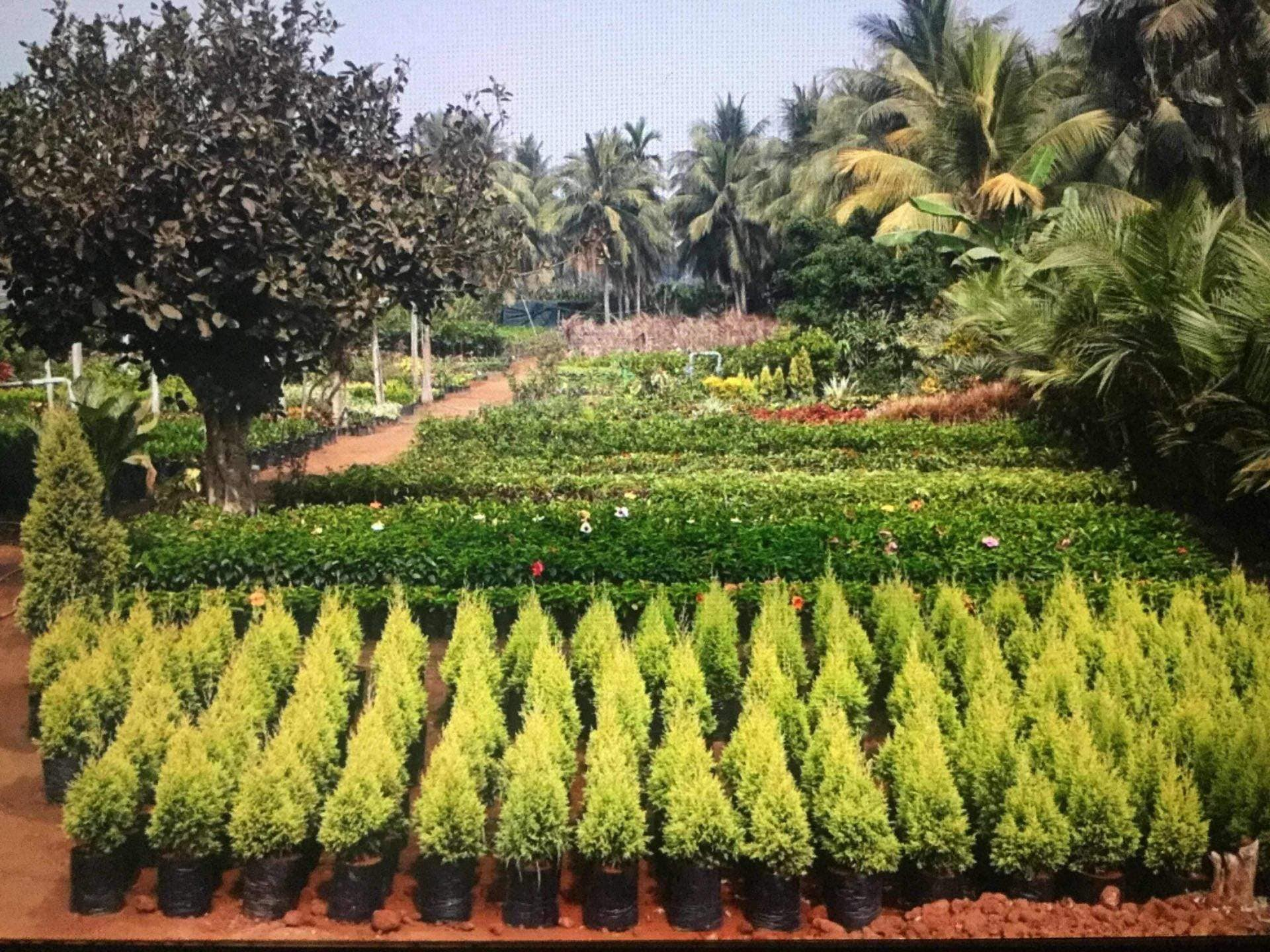 Top 20 Plant Nurseries in Khammam - Best Nursery Plant Suppliers
