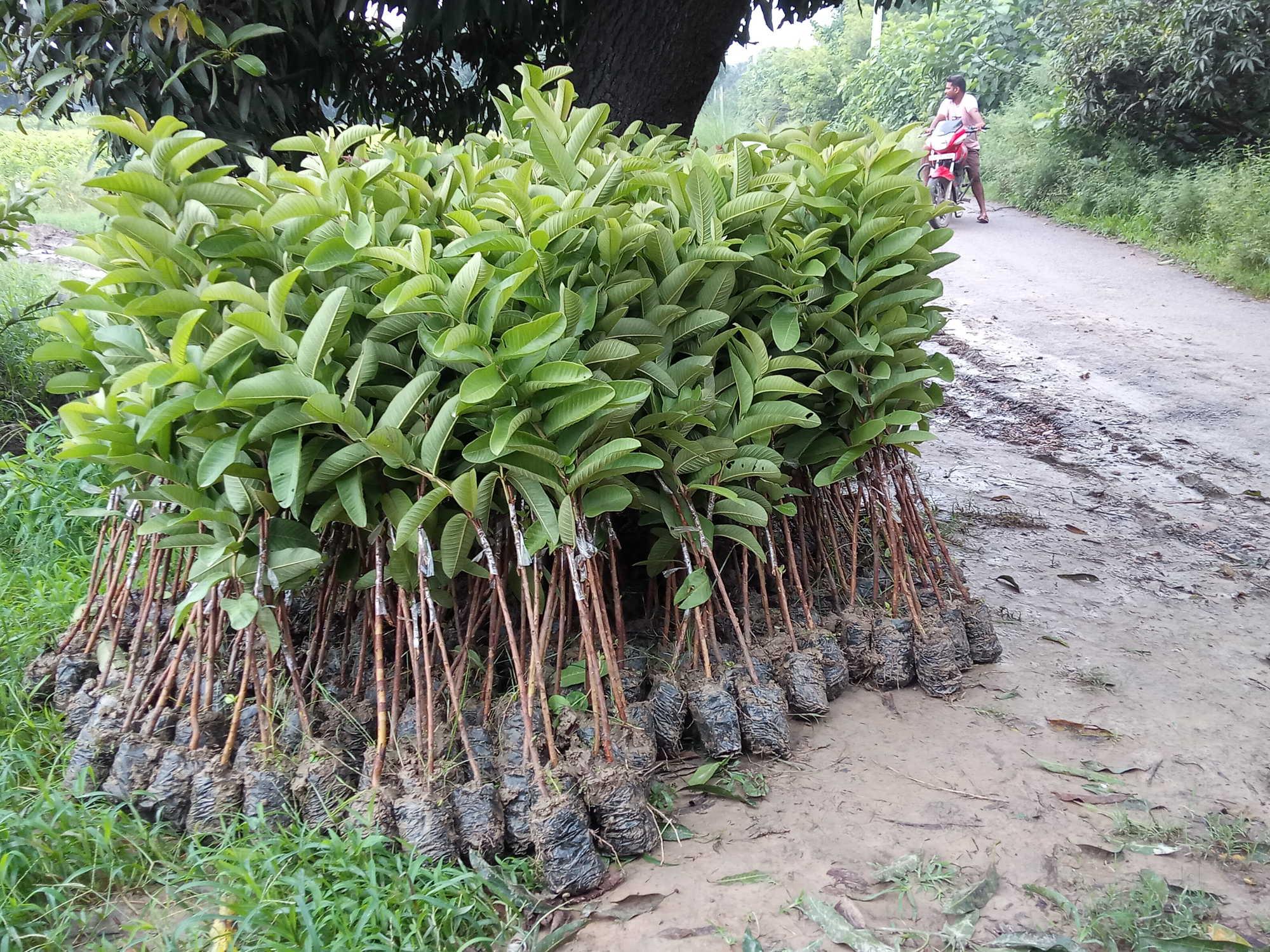 Top 10 Plant Nurseries in Karimnagar - Best Nursery Plant Suppliers