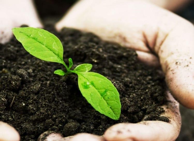 Top 100 Fertilizer Manufacturers in Nashik - Best Fertiliser