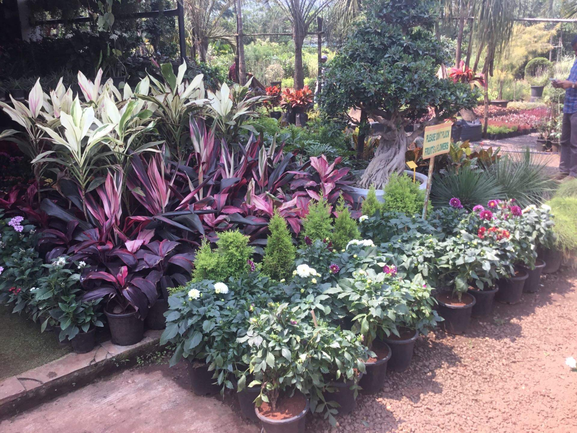 Top 10 Plant Nurseries In Yewalewadi Best Nursery