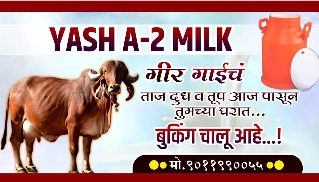 Top 10 Gir Cow Milk Retailers in Pune - Justdial
