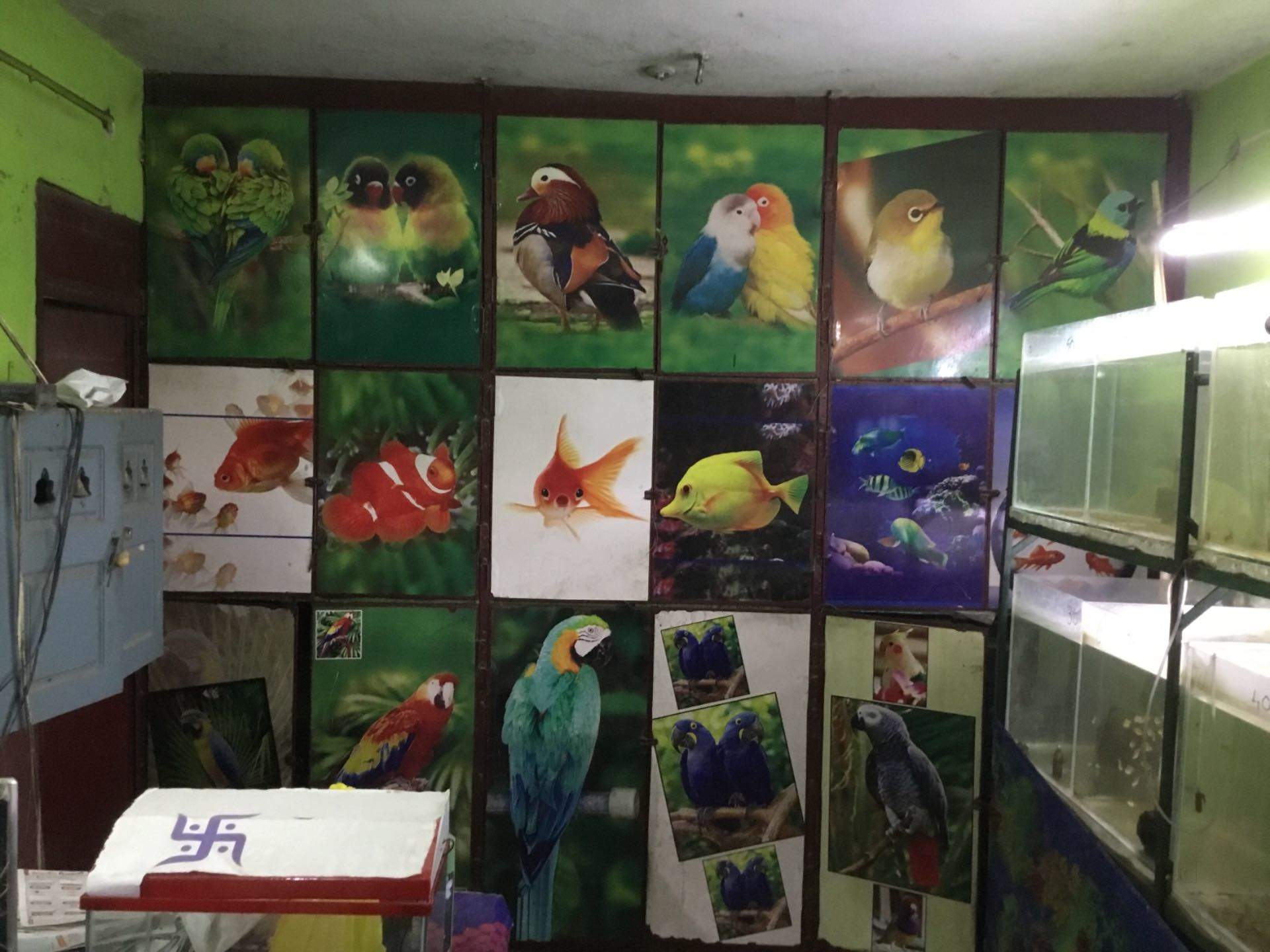Top 10 Pet Shops For Birds in Vijayawada - Best Bird Shops - Justdial