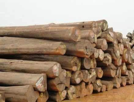 Top 100 Timber Dealers In Visakhapatnam Best Timber Wood