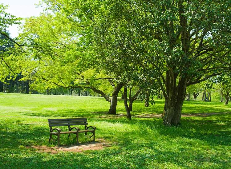 PUSHPANJALI GARDEN, Dayal Bagh - Parks in Agra - Justdial