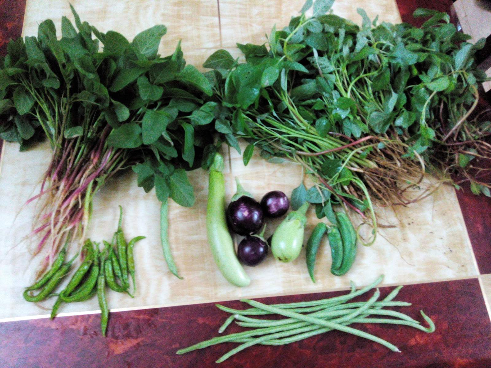 Top 50 department of horticulture in thiruvanmiyur chennai justdial department of horticulture in thiruvanmiyur chennai solutioingenieria Choice Image