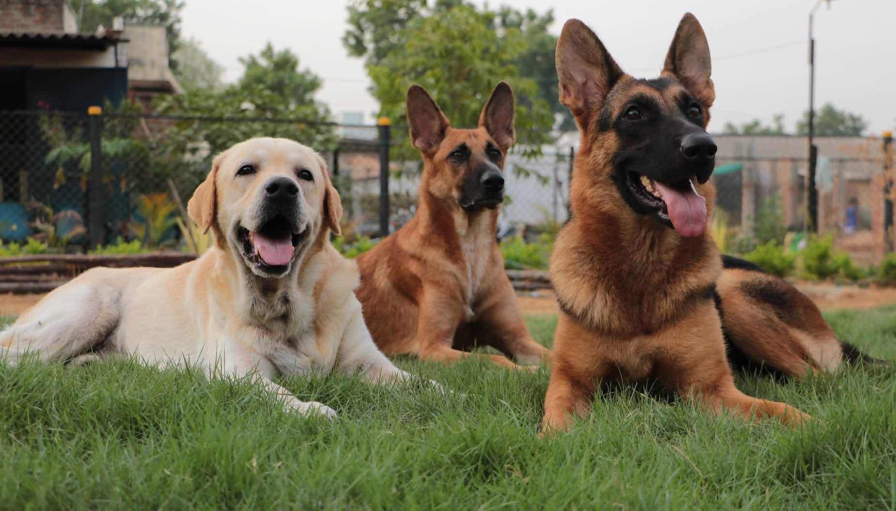 collar-club-by-top-dog-academy-thirunind