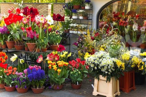 Avon Chennai Florist Anna Nagar Florists In Chennai Justdial