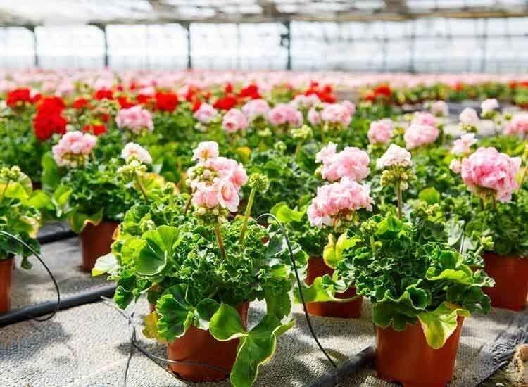 Plant Nurseries In Kolar