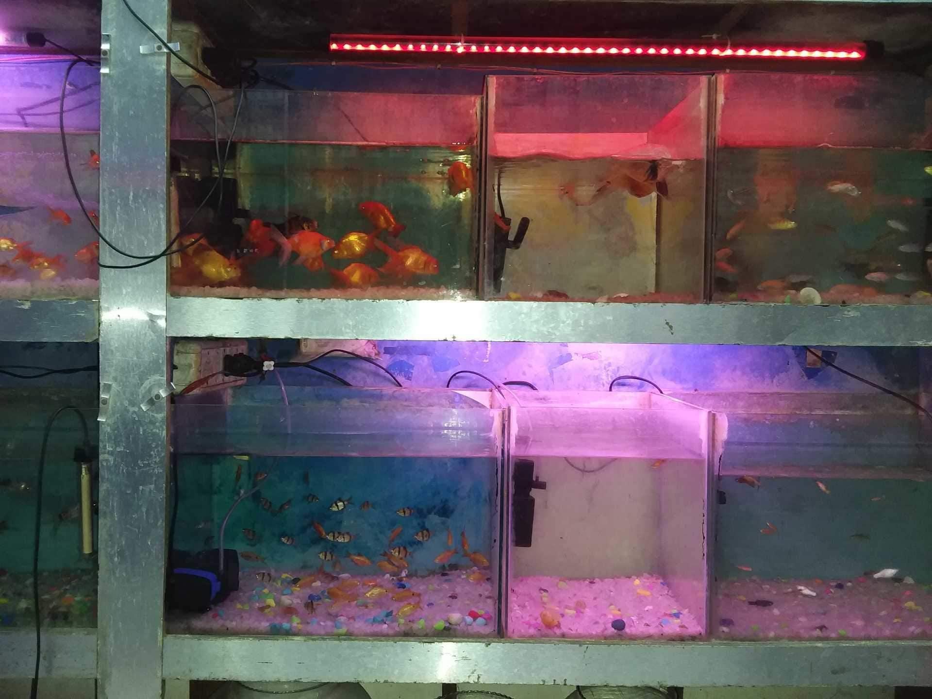 Top 100 Fish Aquarium Dealers In Delhi Best Fish Aquarium Shops