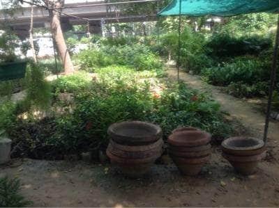 Greenview Nursery Chattarpur Plant Nurseries In Delhi
