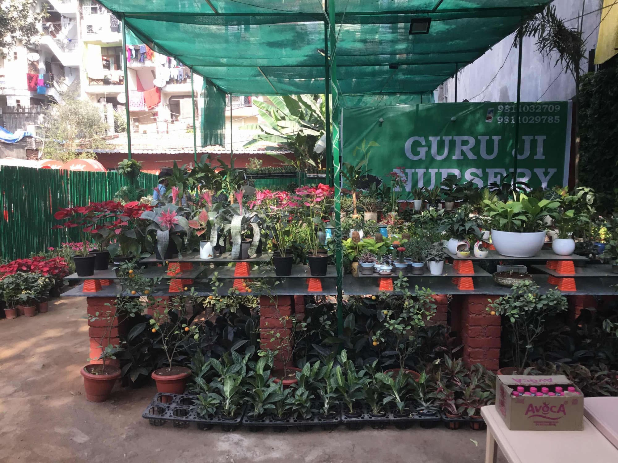 top 10 plant nurseries in saket - best nursery plant suppliers delhi