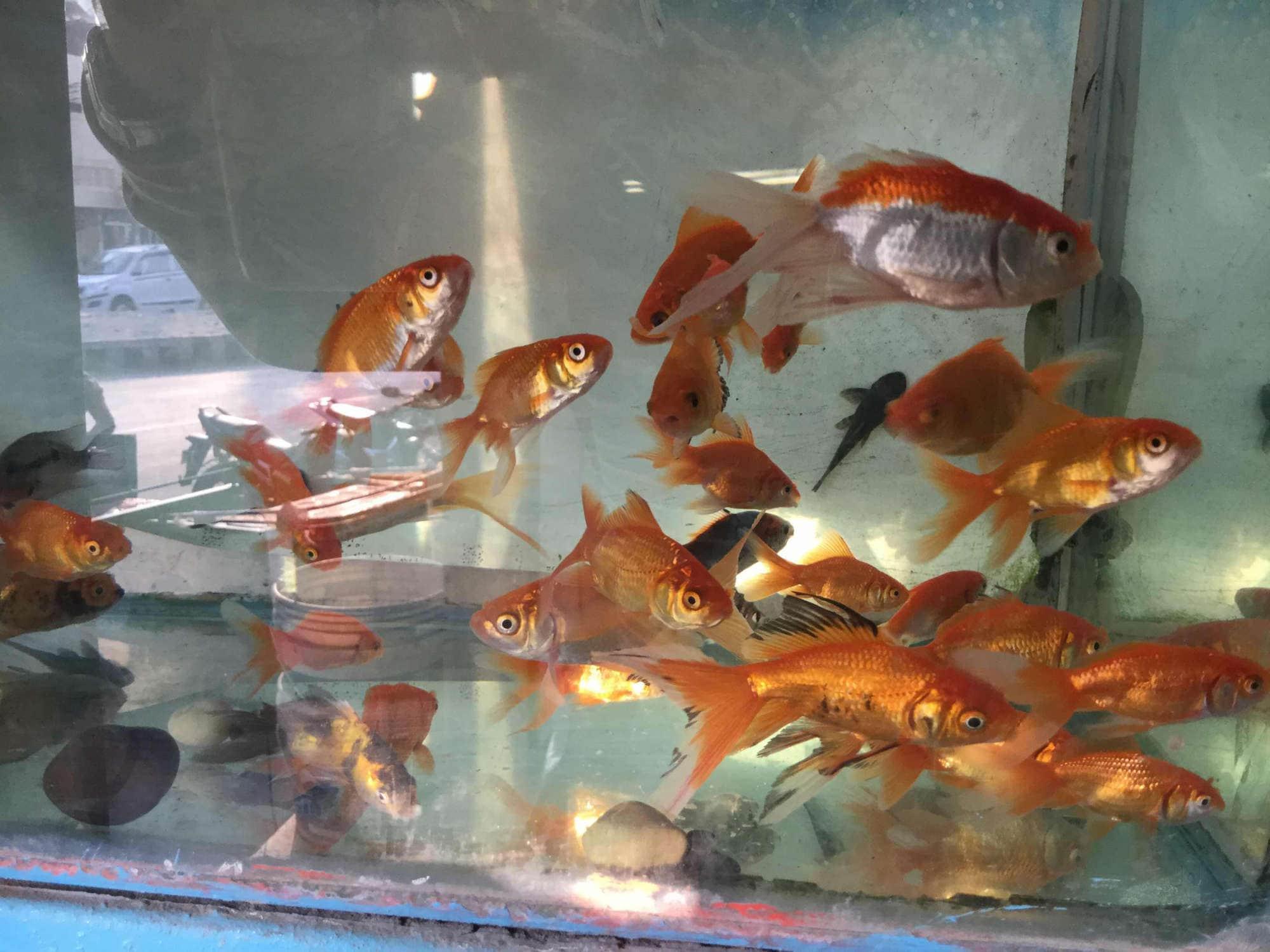 Top 100 Fish Tank Wholesalers In Delhi Justdial