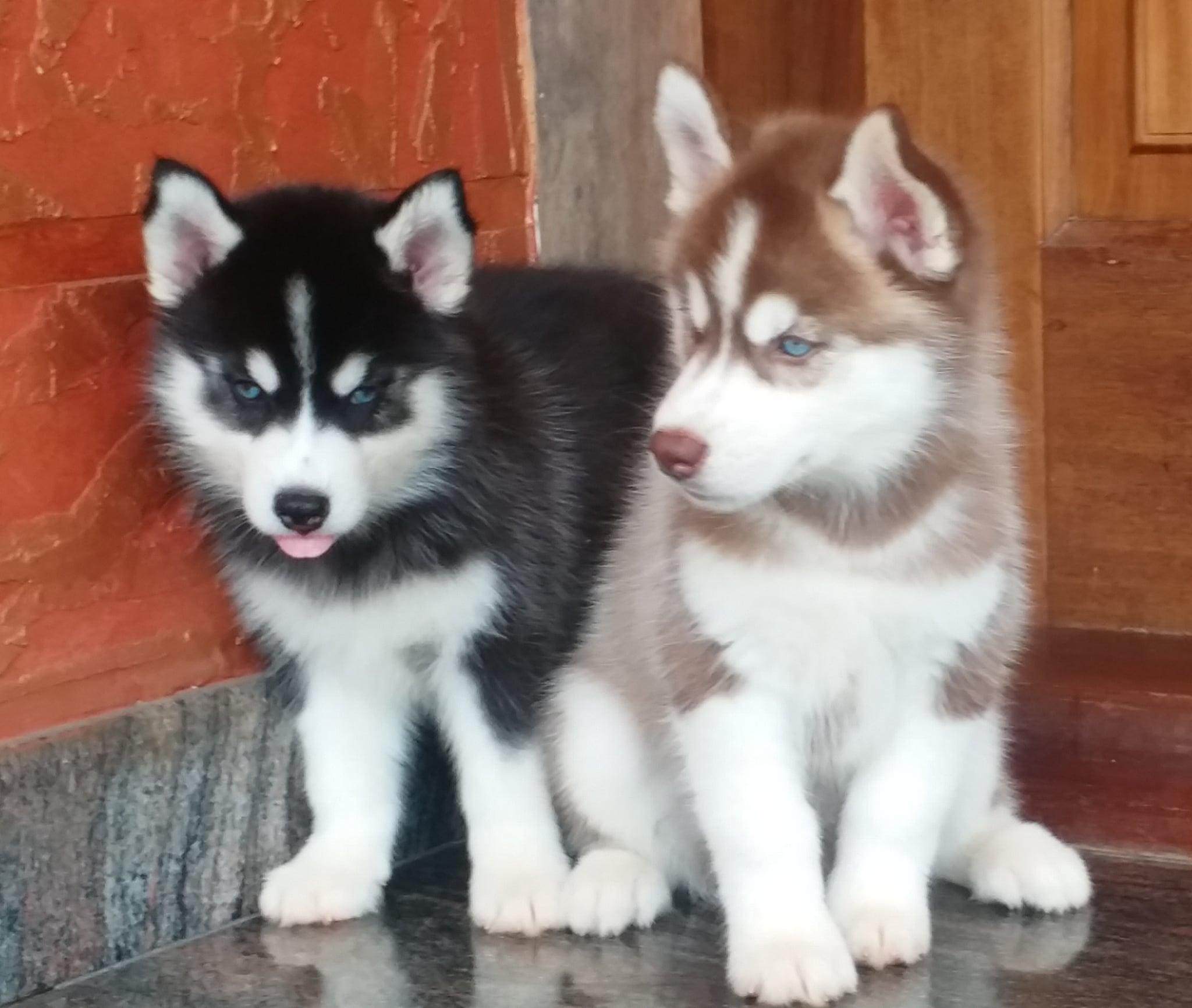 Top 100 Pet Shops in Ernakulam - Best Pet Store & Suppliers - Justdial