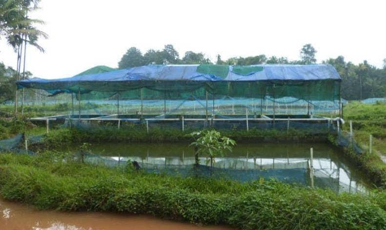 Top 50 Aquarium Fish Wholesalers in Perumbavoor, Ernakulam - Justdial