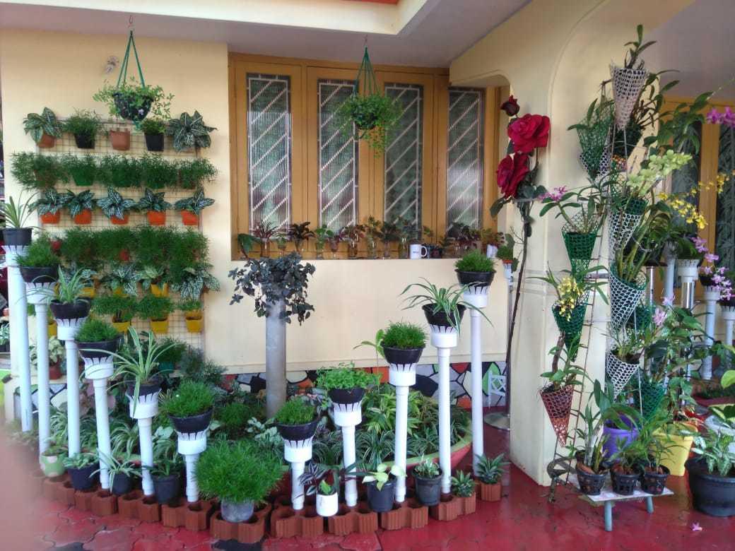 Butterfly Nursery Plants And Garden Accessories Mattancherry Plant Nurseries In Ernakulam Justdial