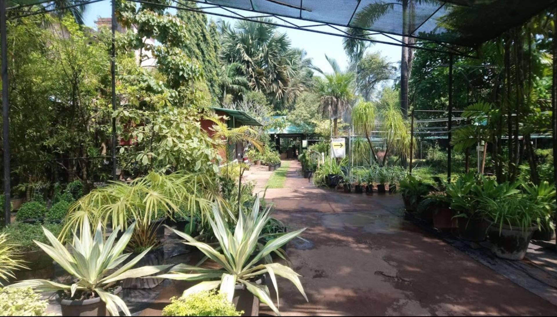 Plant Nurseries In Margao Goa