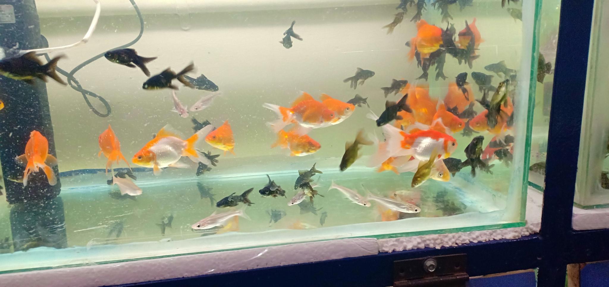 Top Fish Aquariums in Hindupur - Best Fish Aquarium Dealers - Justdial