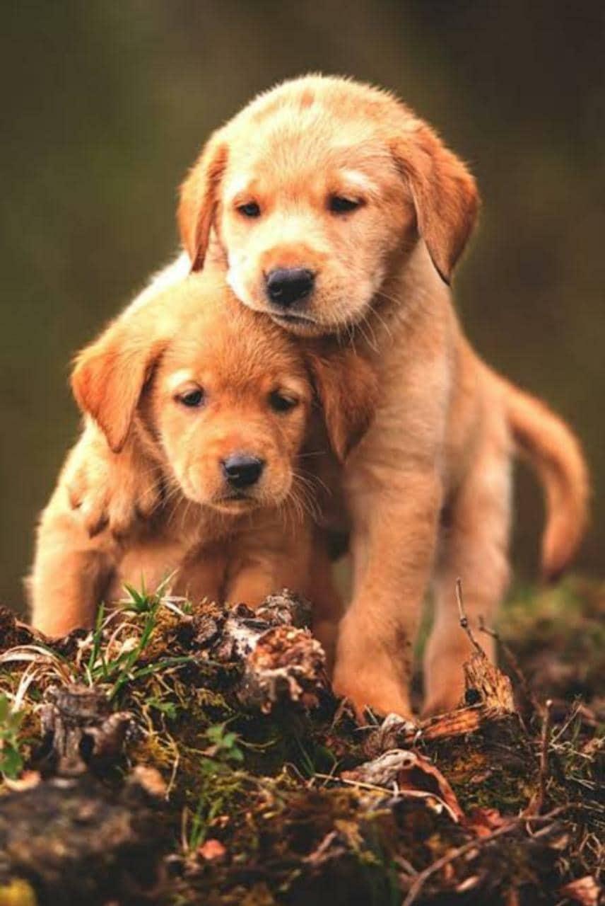 Top 30 Mobile Veterinary Clinics in Hyderabad - Best Pet