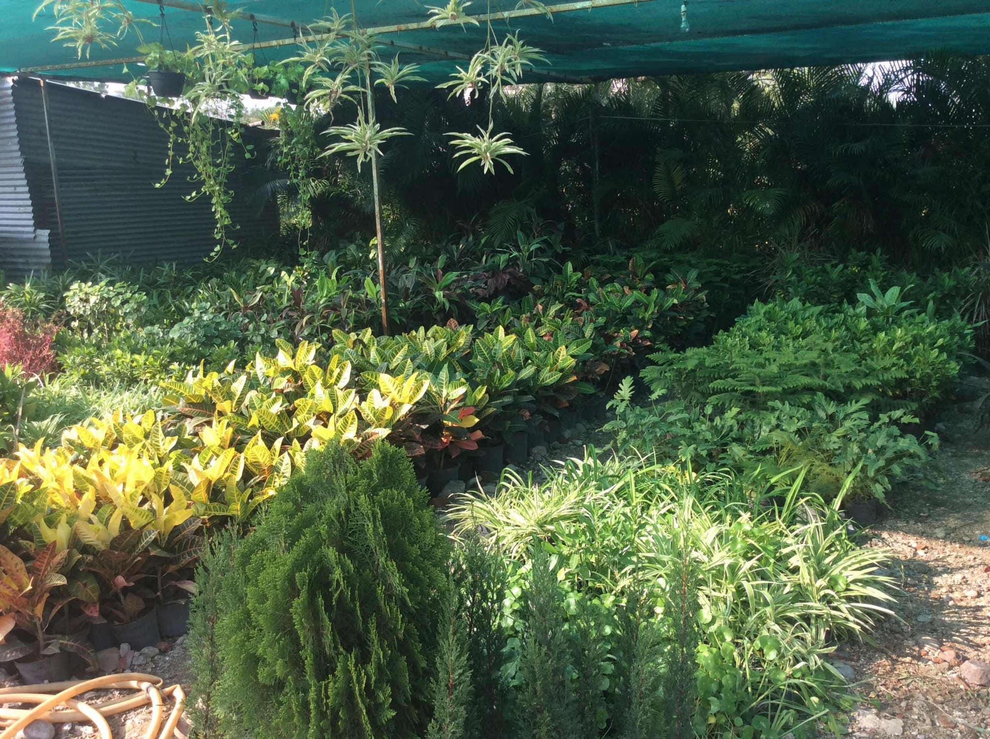 Shivani Nursery Farms In Indore