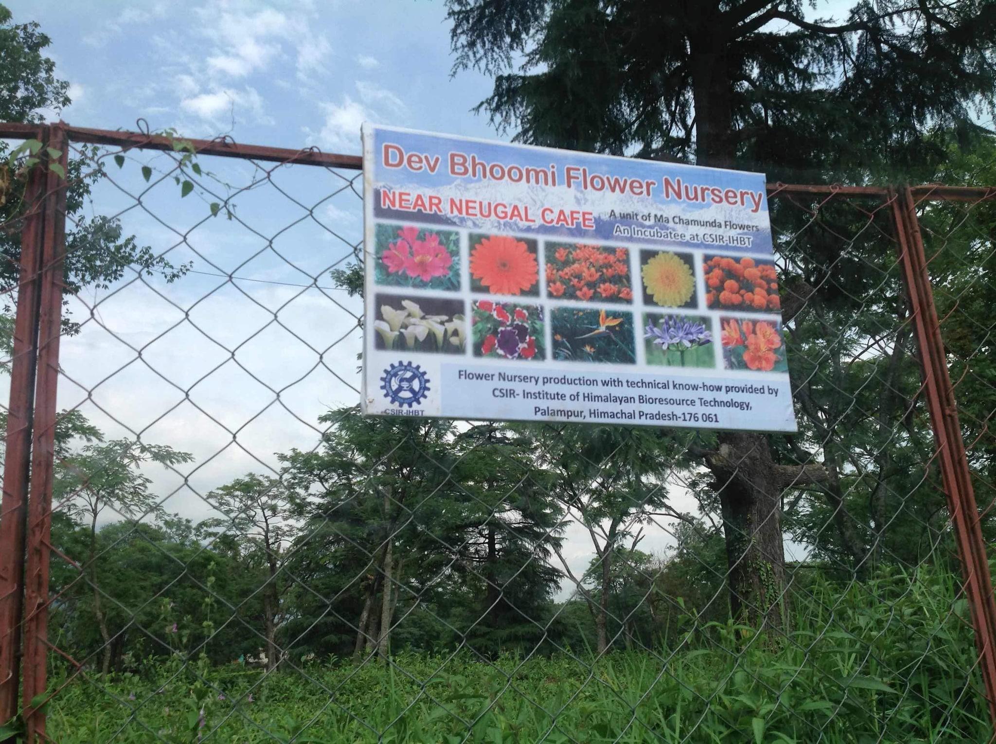 Top 20 Plant Nurseries in Auc Palampur - Best Nursery Plant