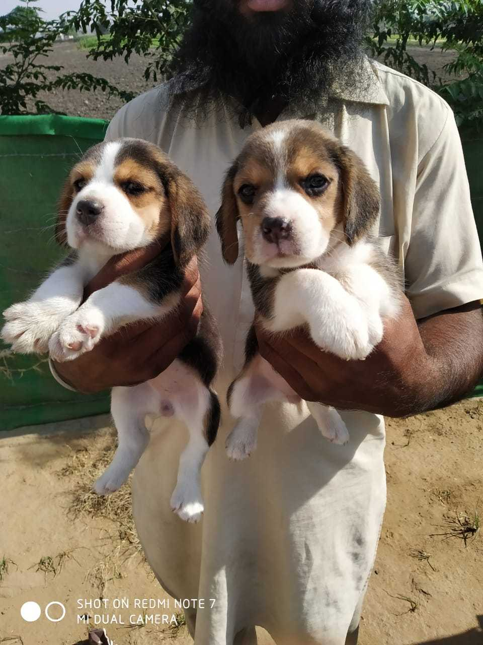 Top Pet Shops For Dog in Birati - Best Pet Store - Justdial