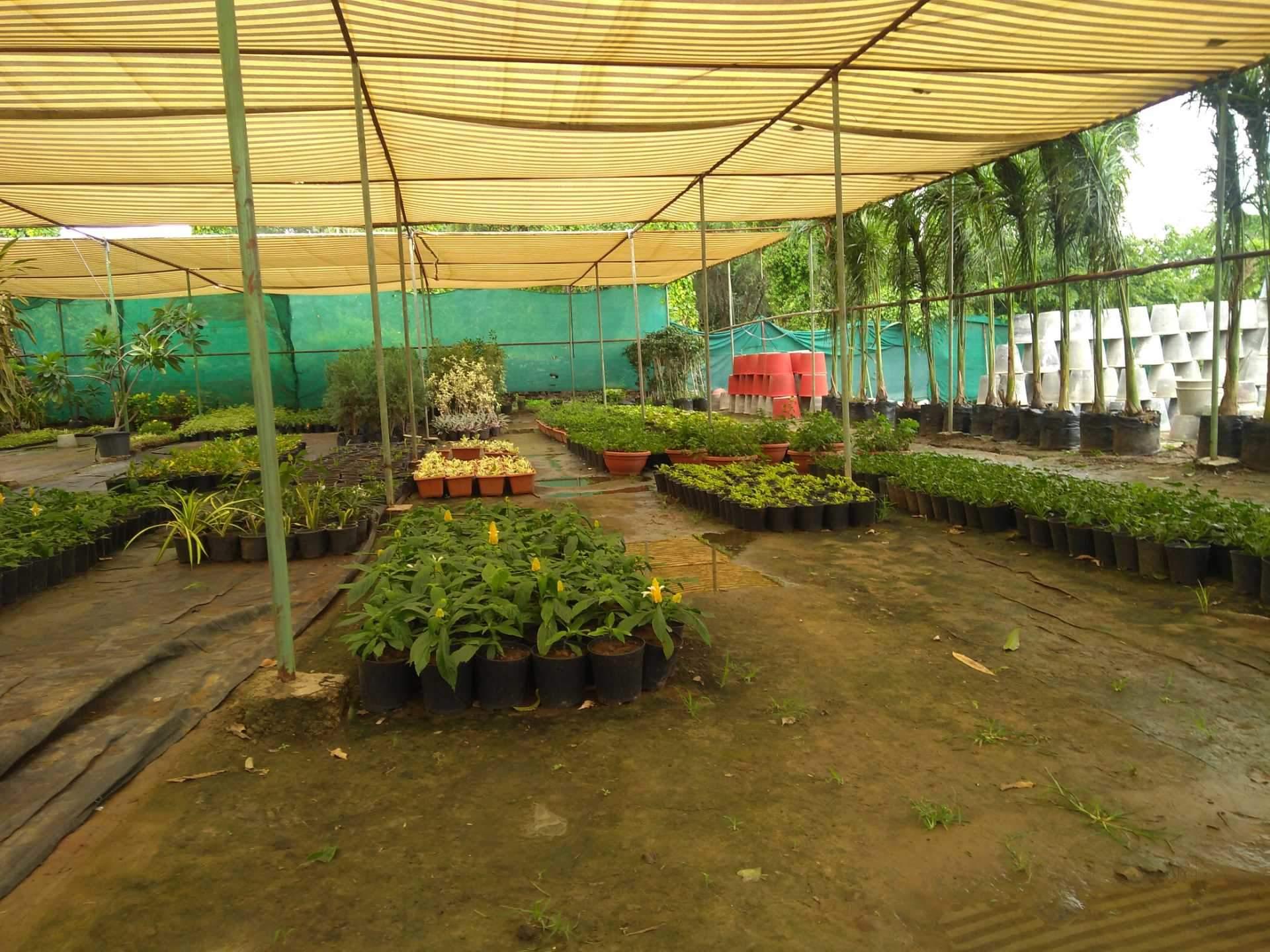 Top 100 Plant Nurseries in Kota-Rajasthan - Best Nursery Services ...