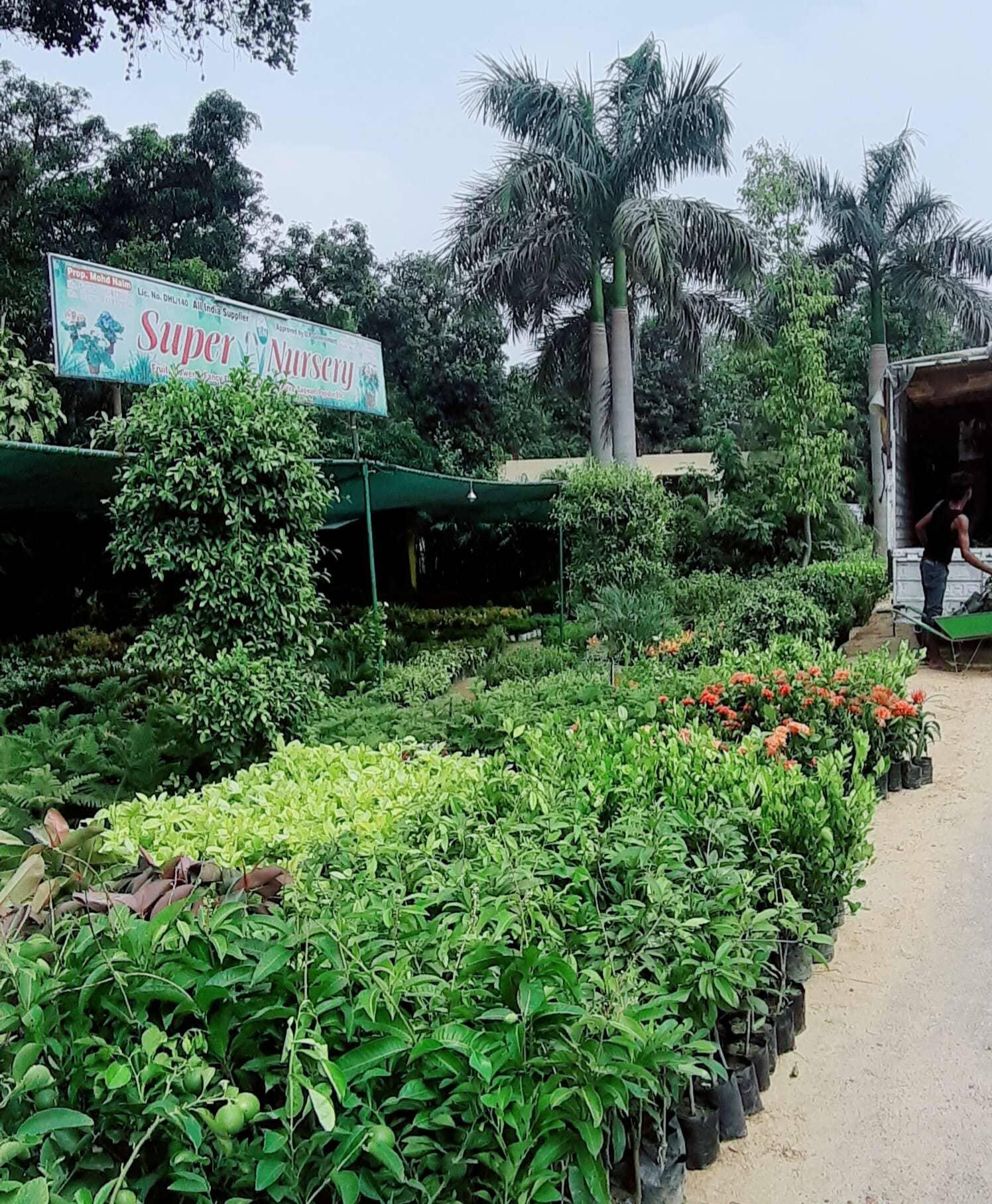 Top 50 Fruit Plant Nurseries in Malihabad - Best Custard Apple Plant
