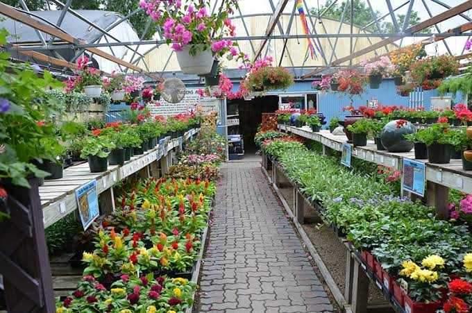 Ruhita Plant Nursery Chunabhatti