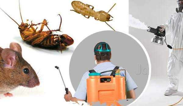 Quick Action Pest Management, Chembur West - Residential Pest Control  Services in Mumbai - Justdial