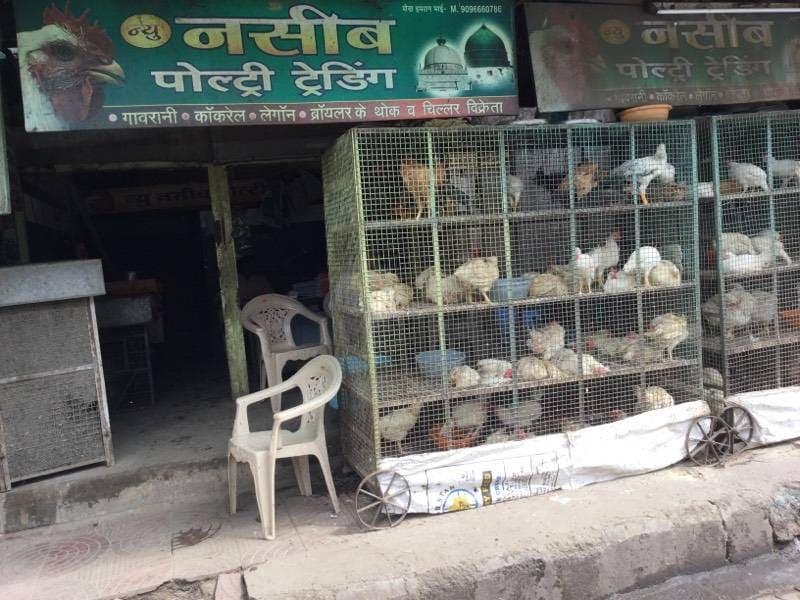 Top 50 Chicken Wholesalers in Nagpur - Best Raw Chicken