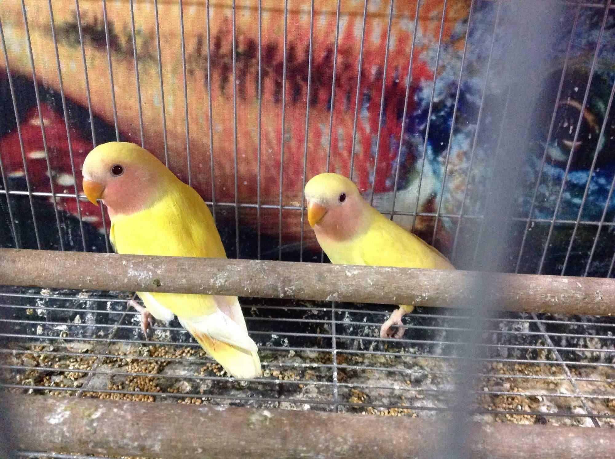Top 50 Pet Shops For Birds in Nashik - Best Bird Shops - Justdial