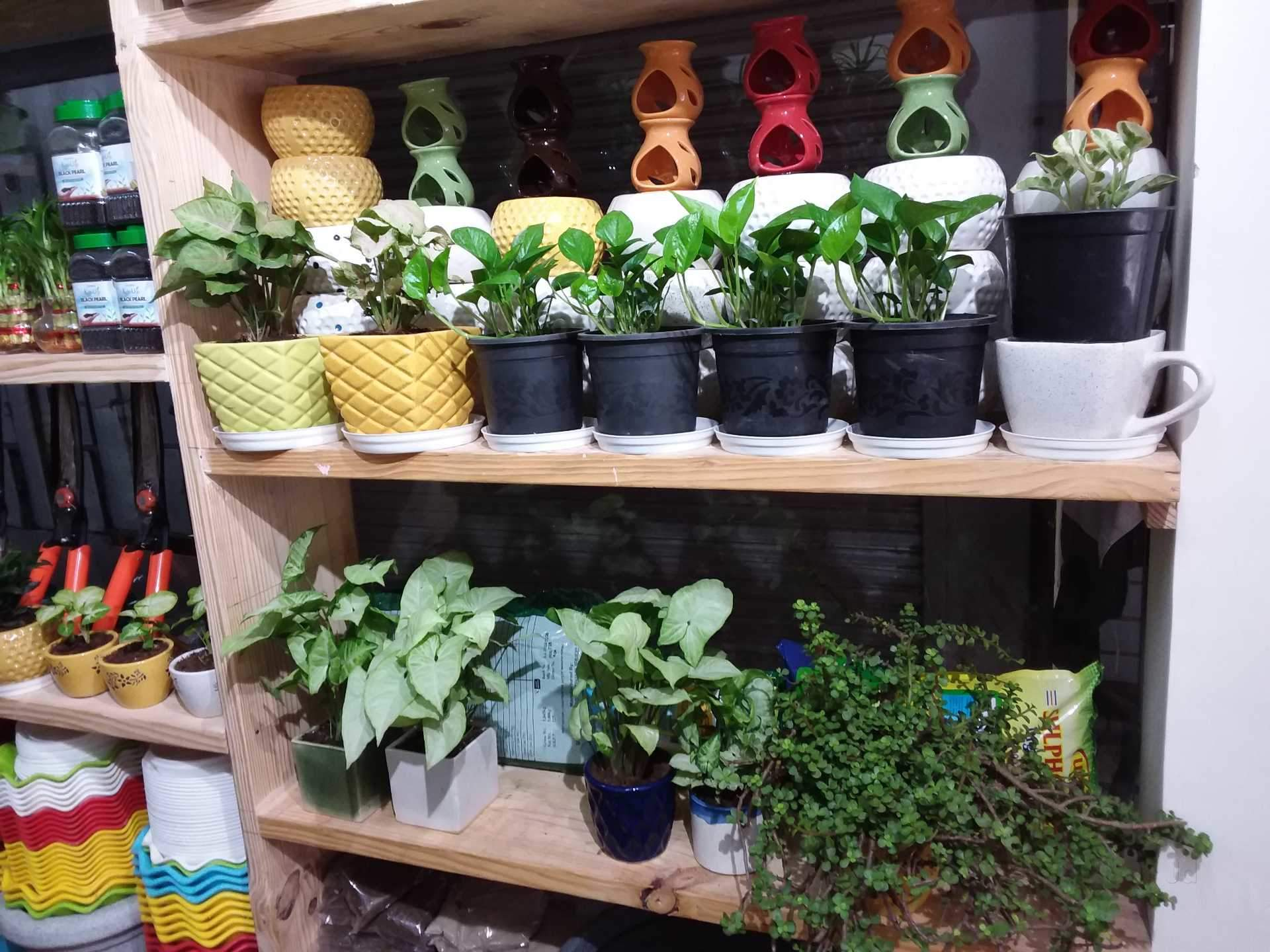 Nursery Plants Government Supplier In Noida Sector 73 Delhi