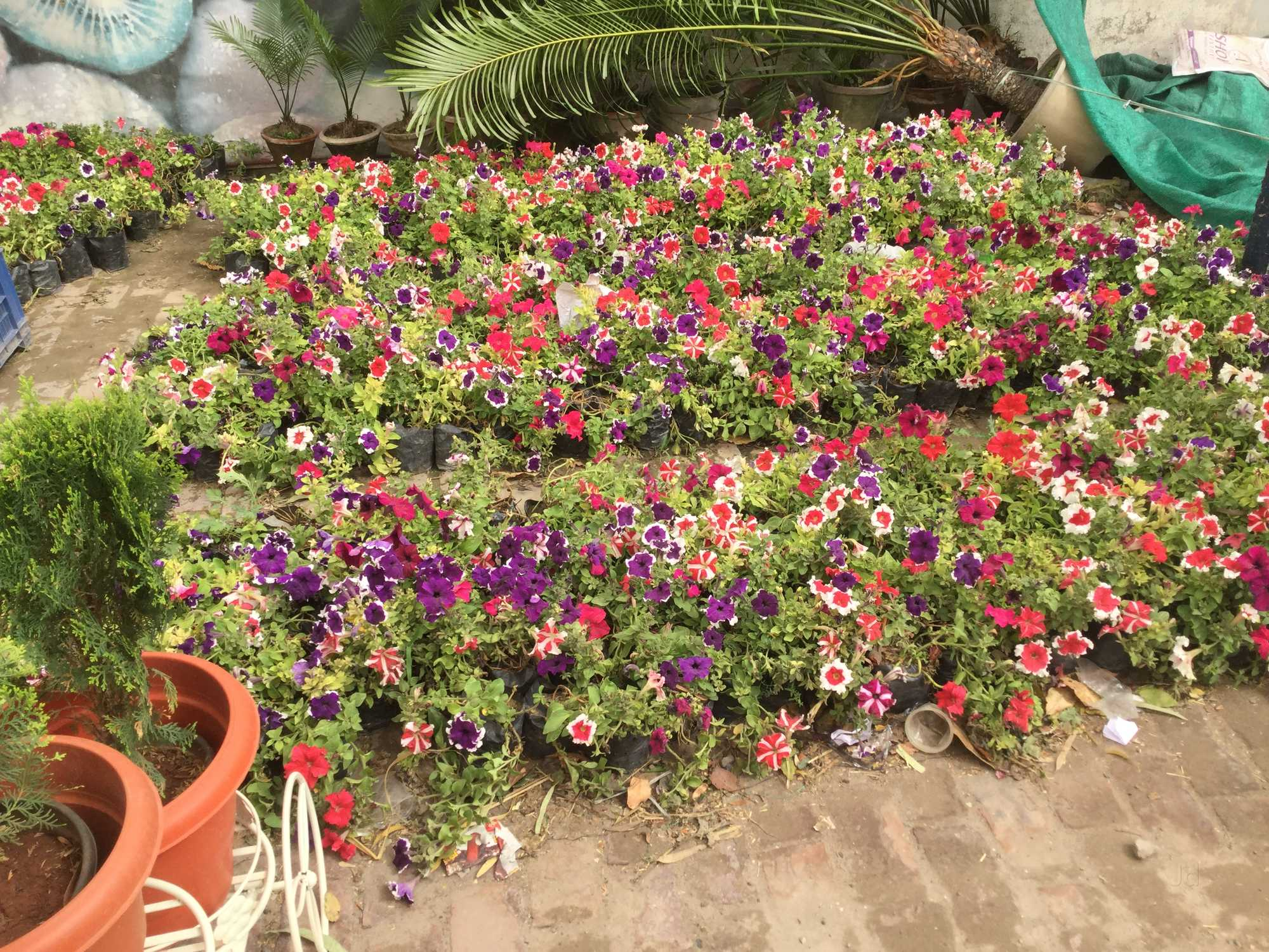Top Plant Nurseries in Moti Bagh - Best Nursery Plant Suppliers ...