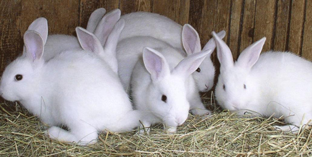 Top Rabbit Farming in Pune - Best Rabbit Farm - Justdial