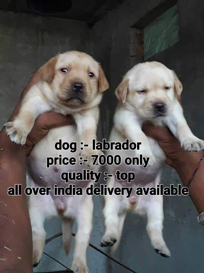 Top Pet Shops in Adra, Purulia - Best Pet Store & Suppliers