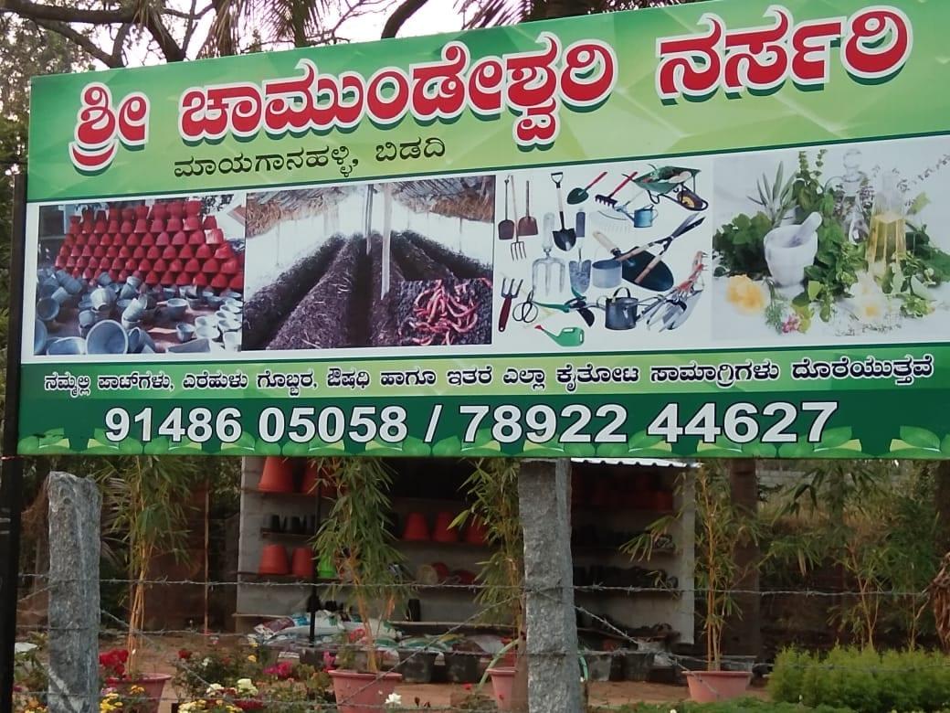 Top Plant Nurseries In Ramanagaram Ho Best Nursery Plant Suppliers