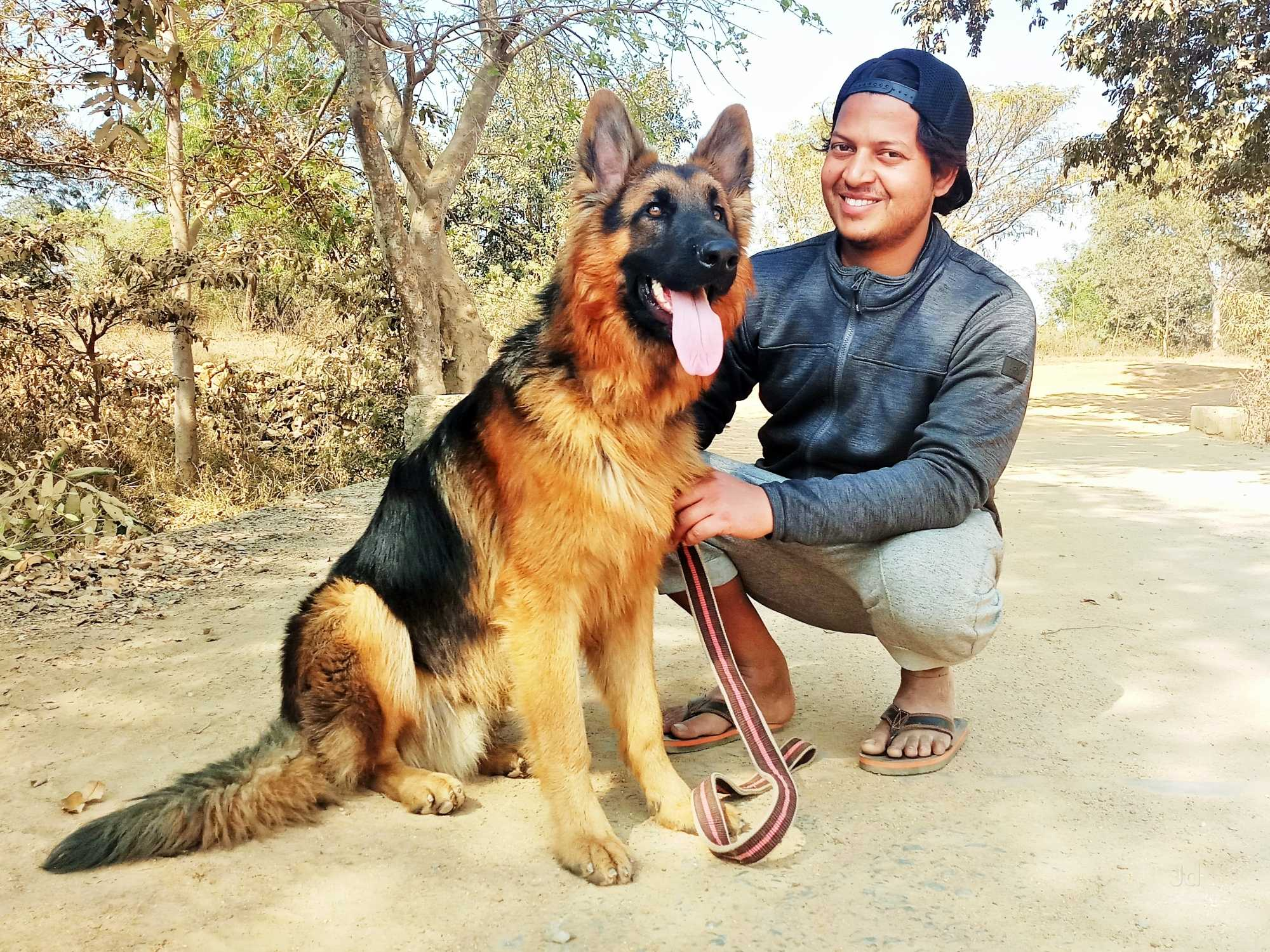 Top 3 Pet Shops For Golden Retriever In Kanke Road Best Pet Stores