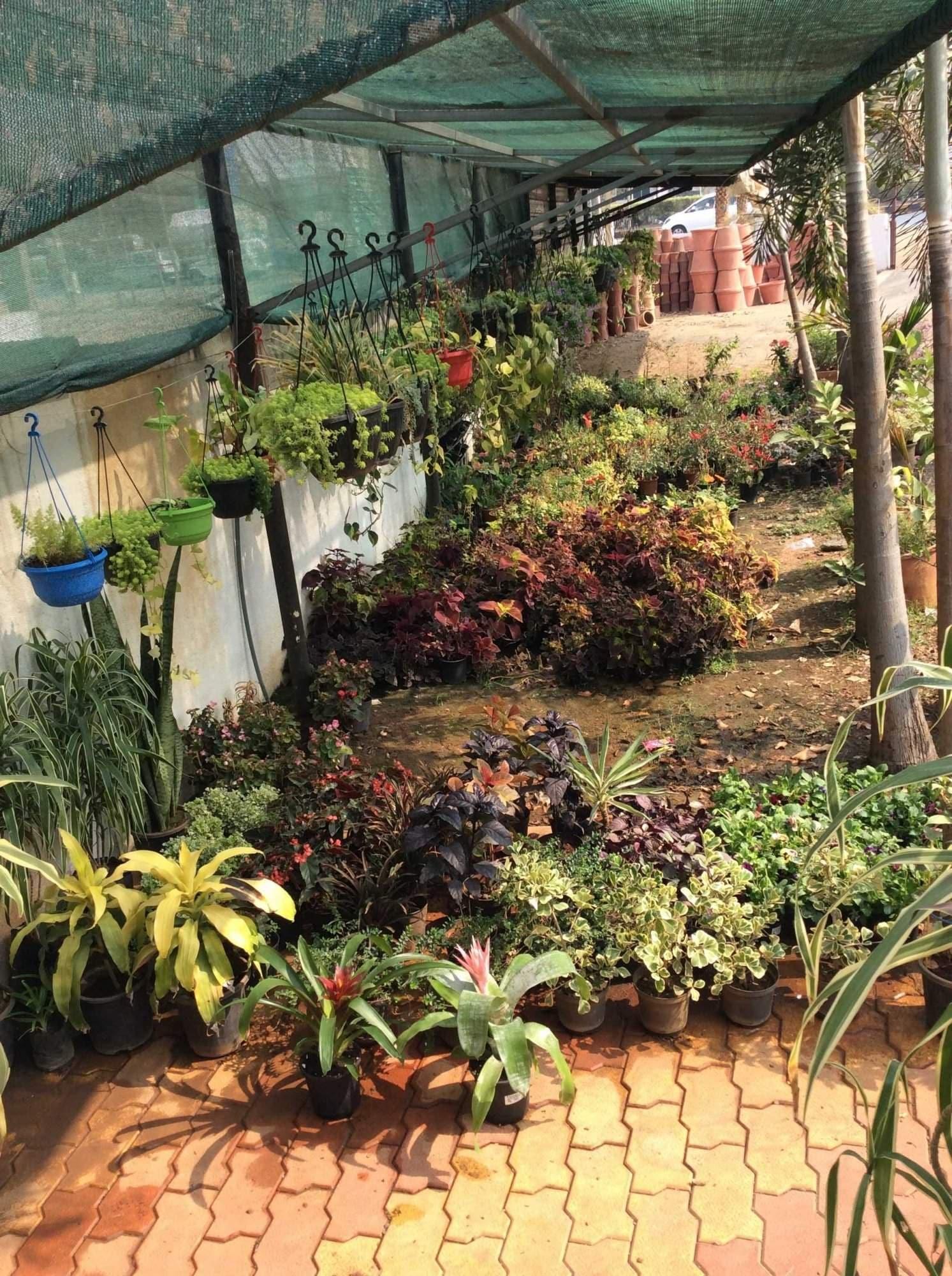 Top Plant Nurseries in Kamrej - Best Nursery Plant Suppliers Surat ...