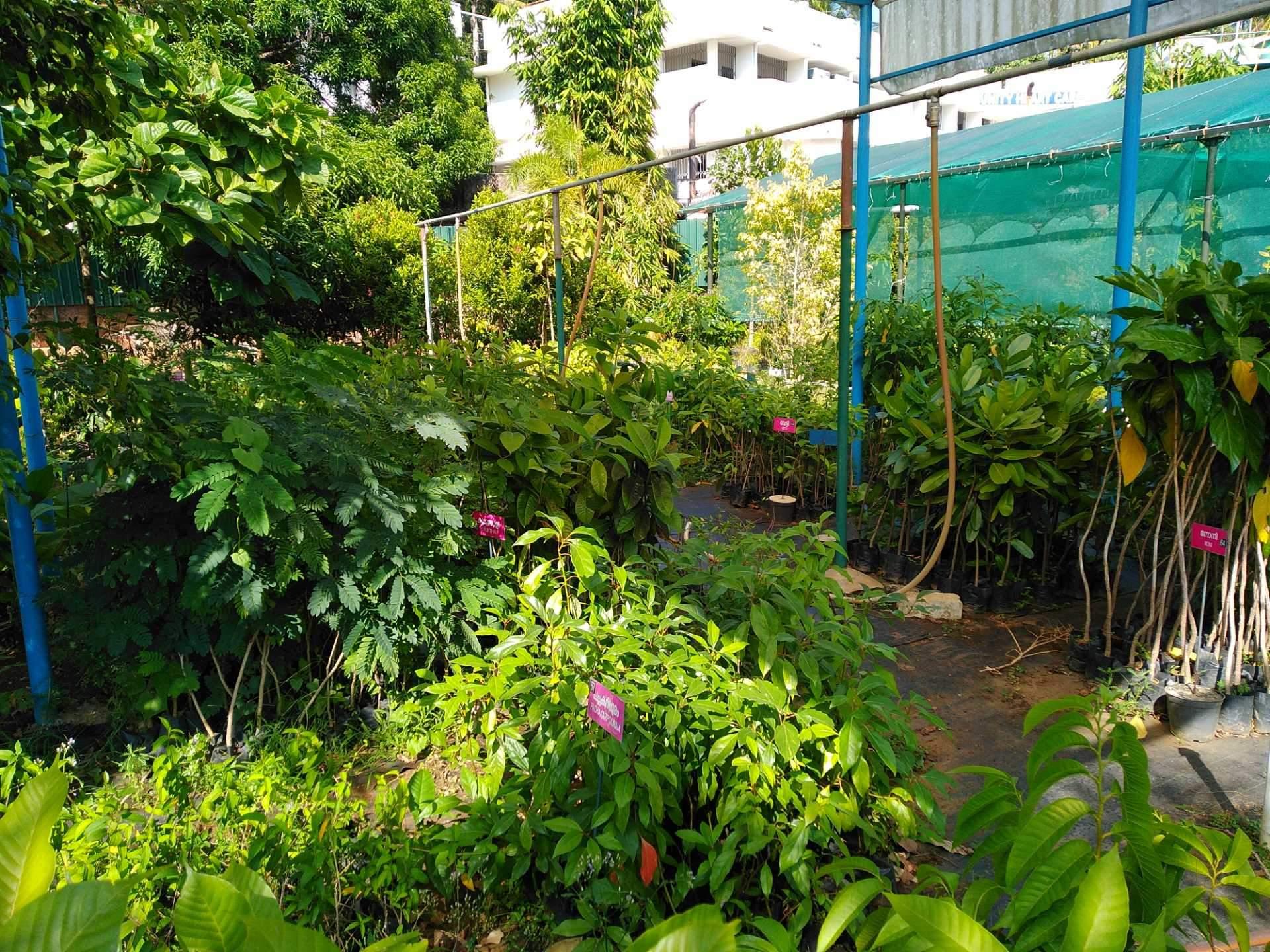 Fruit Plant Nurseries Kerala Thrissur