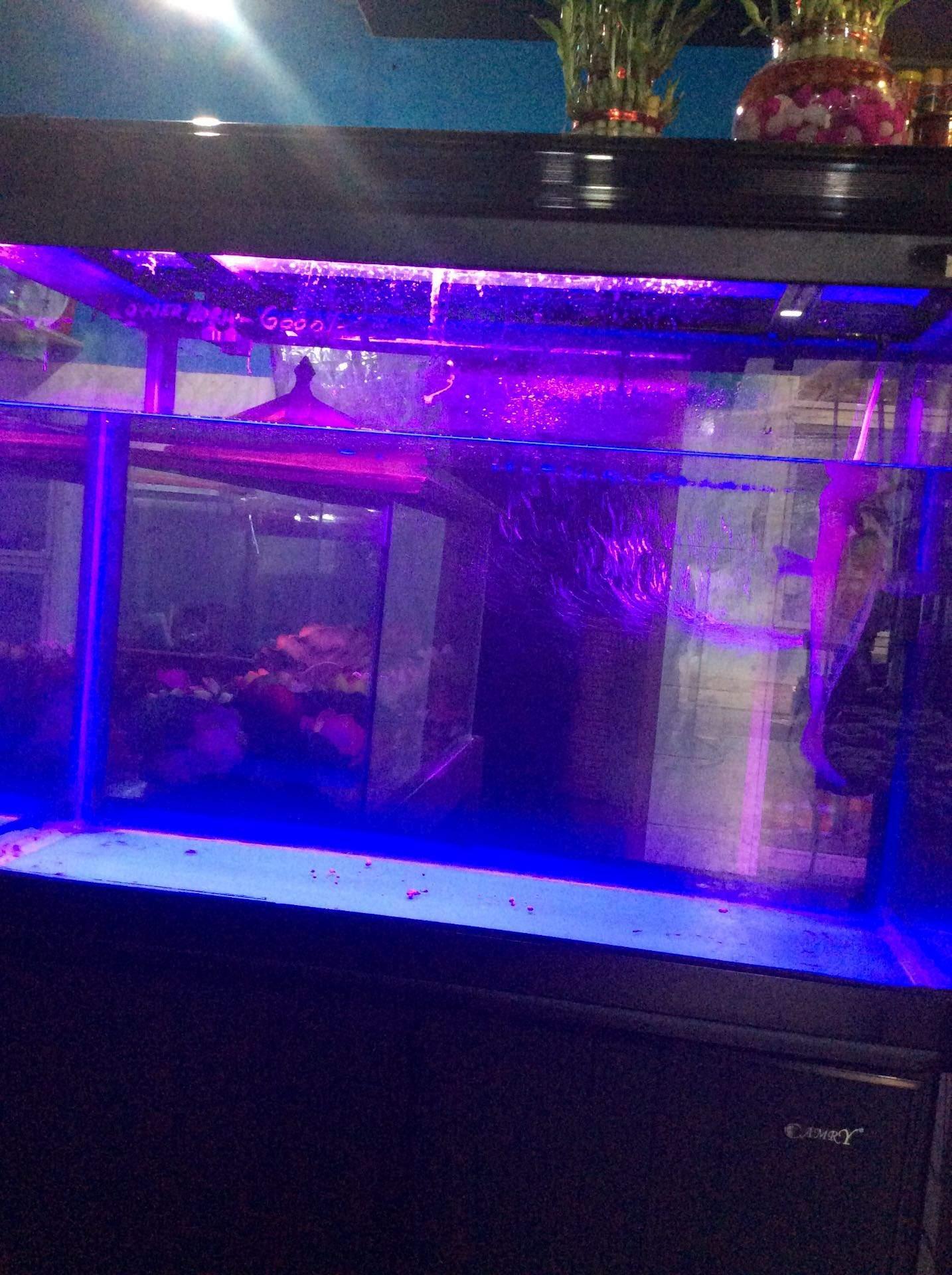 Happy Aquarium Kodungallur Aquariums In Thrissur Justdial