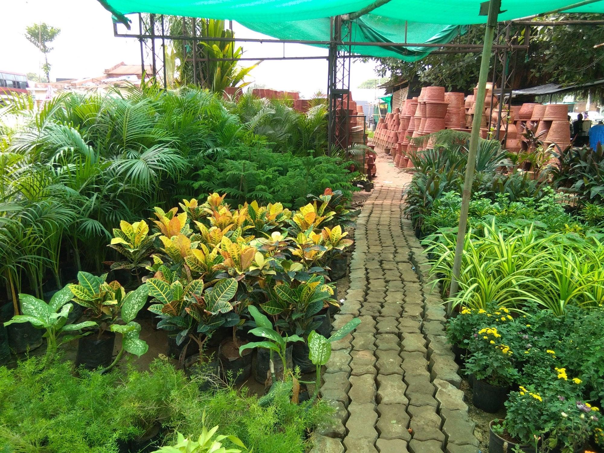 top 50 plant nurseries in vadodara - best nursery plant suppliers