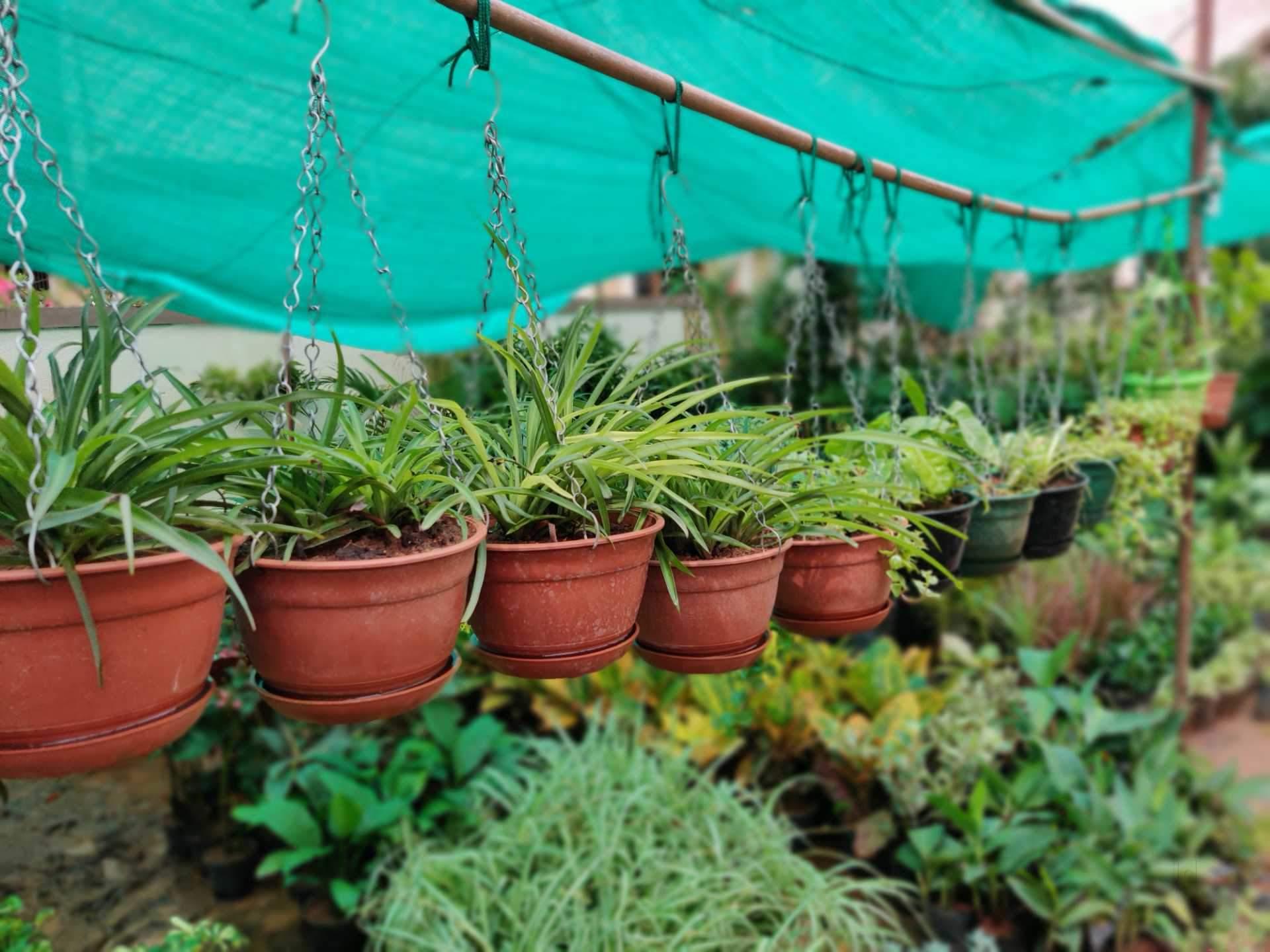 Top 20 Plant Nurseries in Vellore - Best Nursery Plant