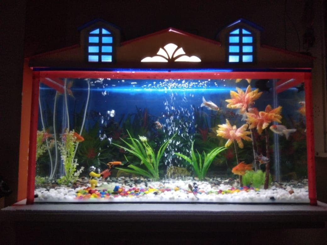 Top Fish Tank Dealers in Wardha - Best Aquarium Tank Dealers
